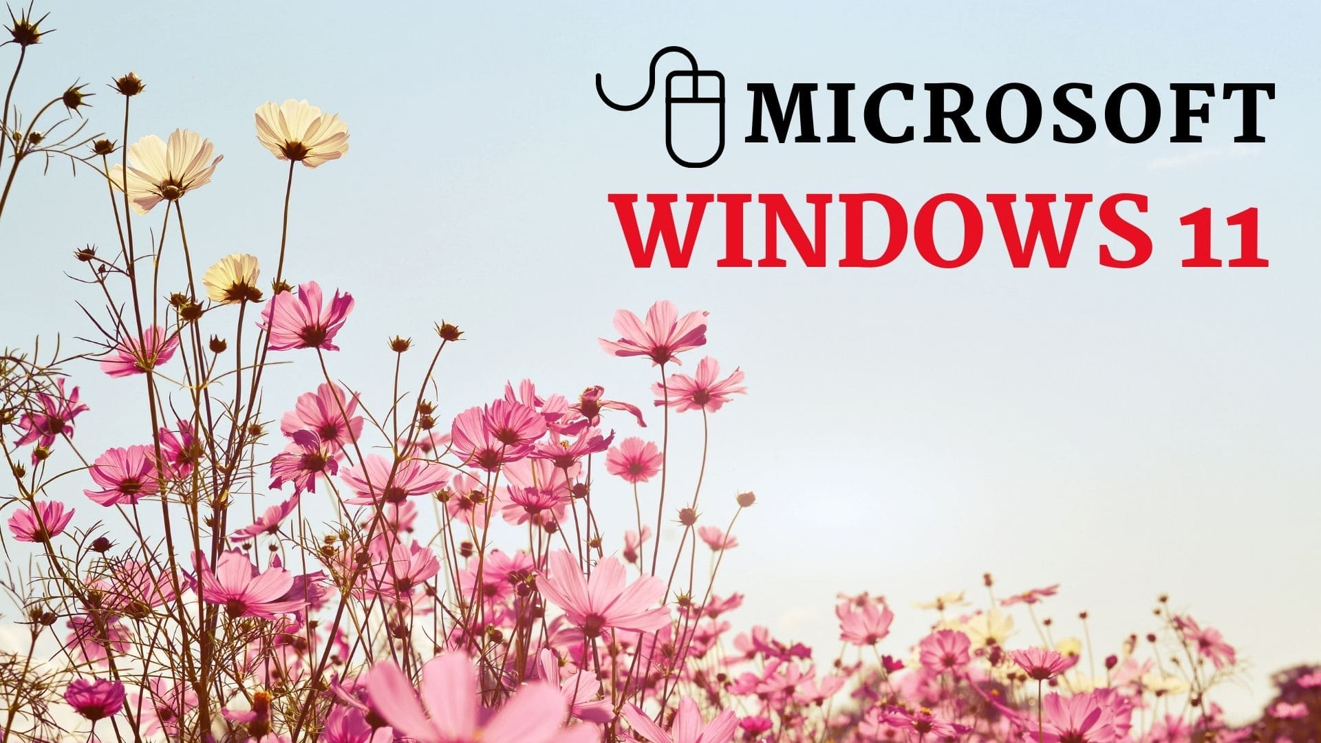 windows 11 launched
